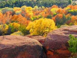 Sedona Fall leave color and orange lichens on cliff by Rusty Albertson