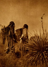 Wielding carrying baskets, Apache women trek across a hillside to the agave field.