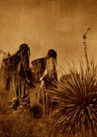 Wielding carrying baskets, Apache women trek across a hillside to the agave field.