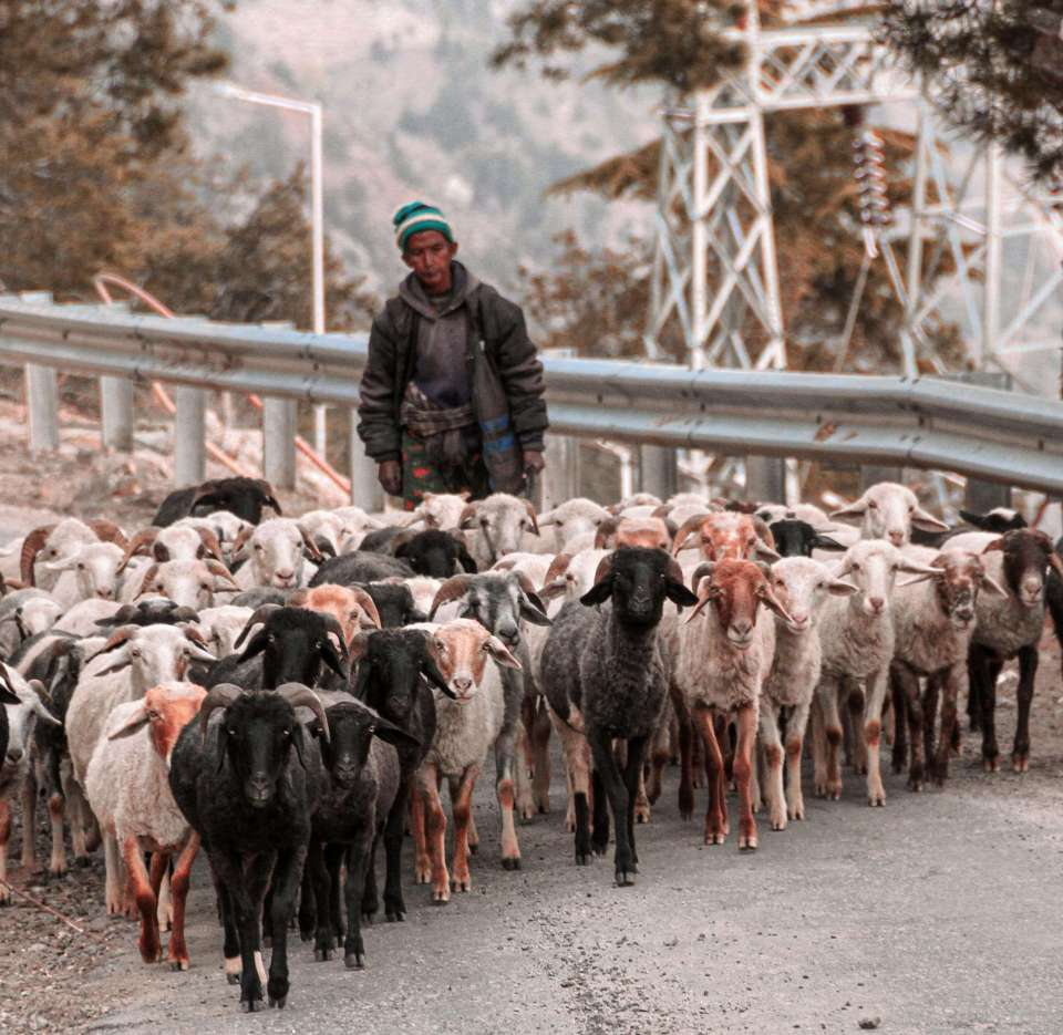 Sheep Herders on my way to Village Kashmir