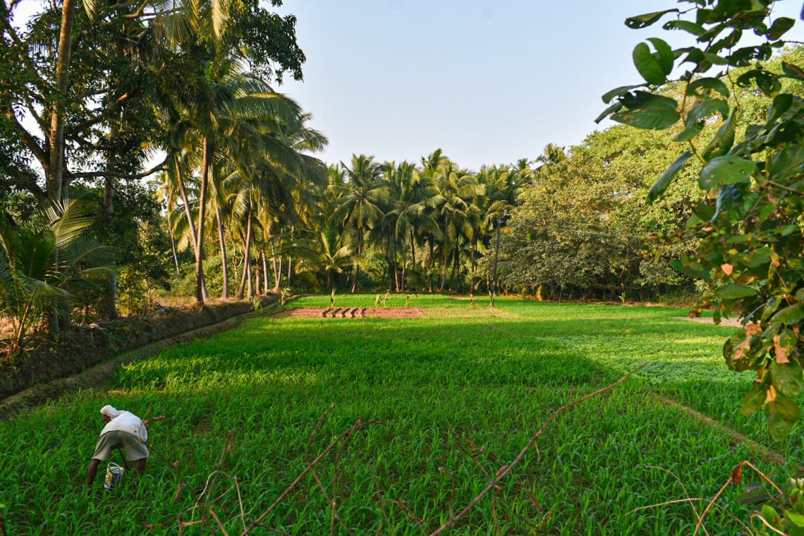 Goa Solo Trip Budget - How to Spend an Astounding 1 Month Below 11K?