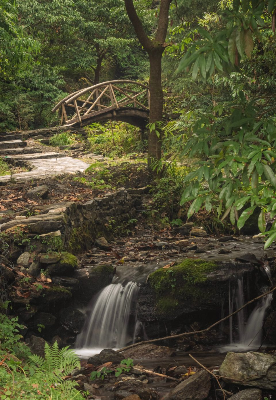 Entry way to the waterfall passing the dense forest