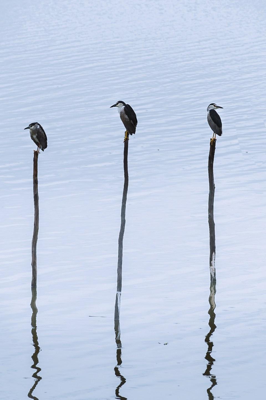 Birds seems like a cricket stumps