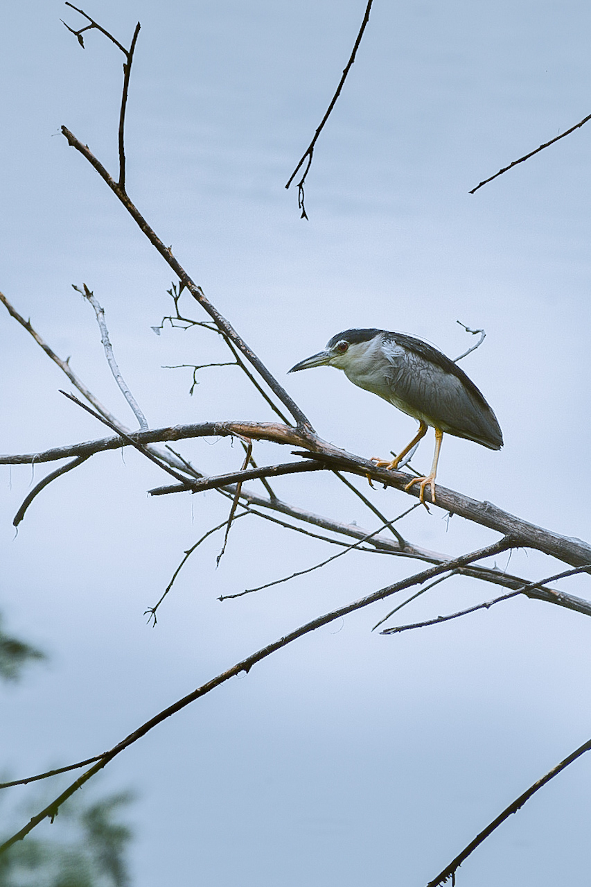 Bird Sitting on the Tree Branches