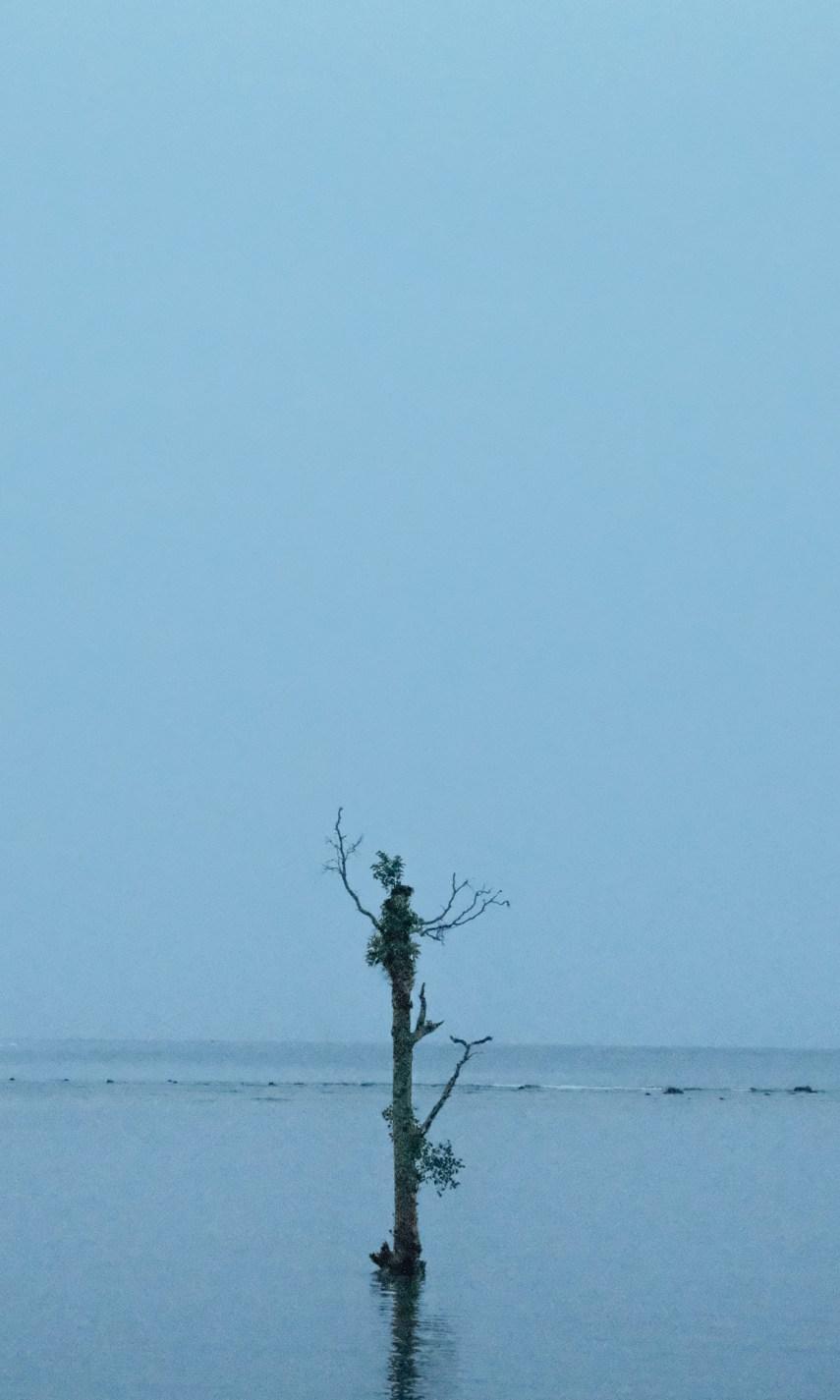 Alone tree in the Andaman Sea
