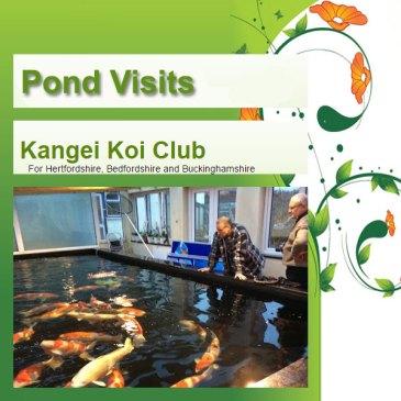 Pond Visits – The Return
