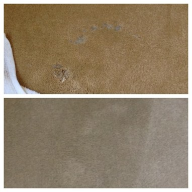 Wax in Carpet Before and After