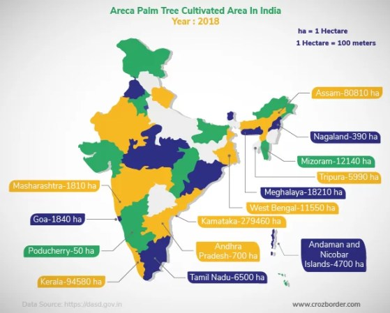 Place where areca palm trees are grown