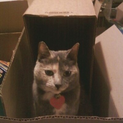 Luvy Cat-in-a-Box