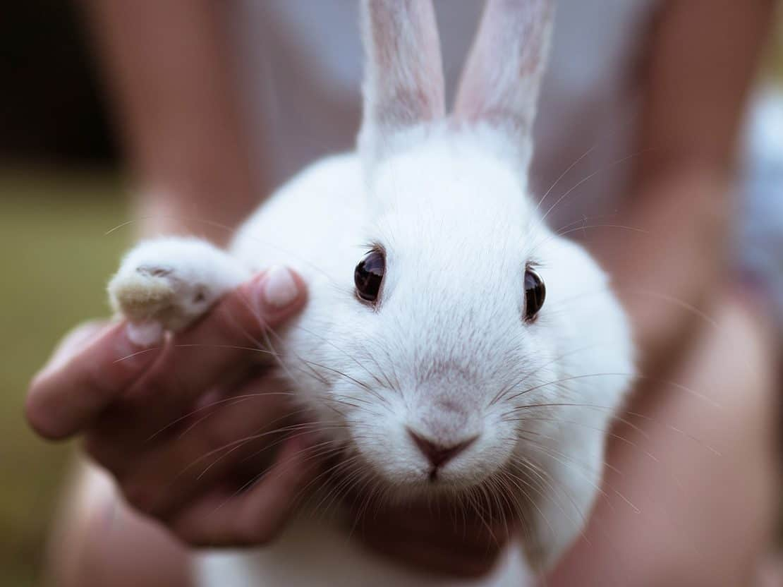 The Leaping Bunny Loophole Drugs And Supplements May Have Been Tested On Animals Cruelty Free Kitty
