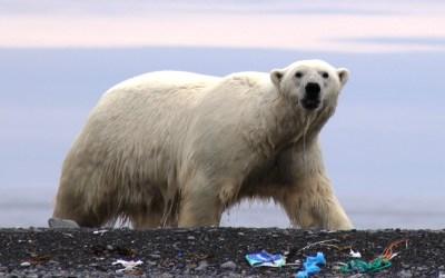 AECO to combat marine plastic litter