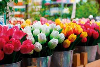 Amsterdam-flower-69490_1280