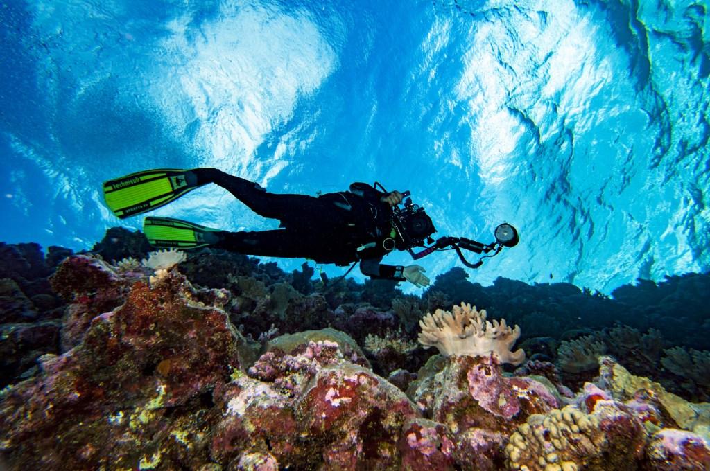 Osprey reef wall
