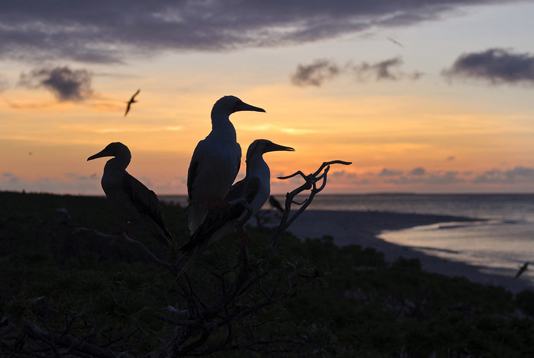 Coringa islets sunset birds