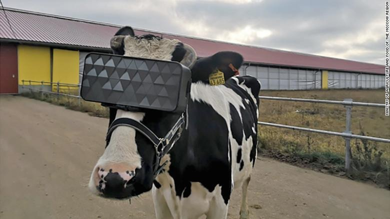 Vaches-vr