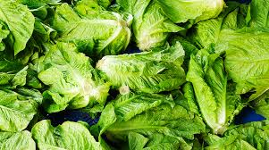 hearts of romaine lettuce