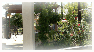 Danza Del Sol Vines