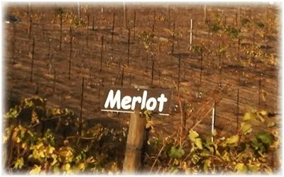 Oak Mountain Merlot