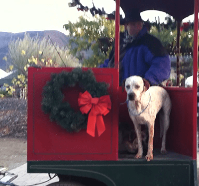 Holiday Trolley and Luna