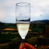 Morning Sparkles at Gloria Ferrer with a vineyard view