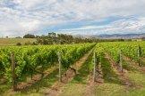 The Vineyard Landscape Australia