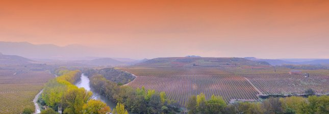 Vineyards in La Rioja Spain