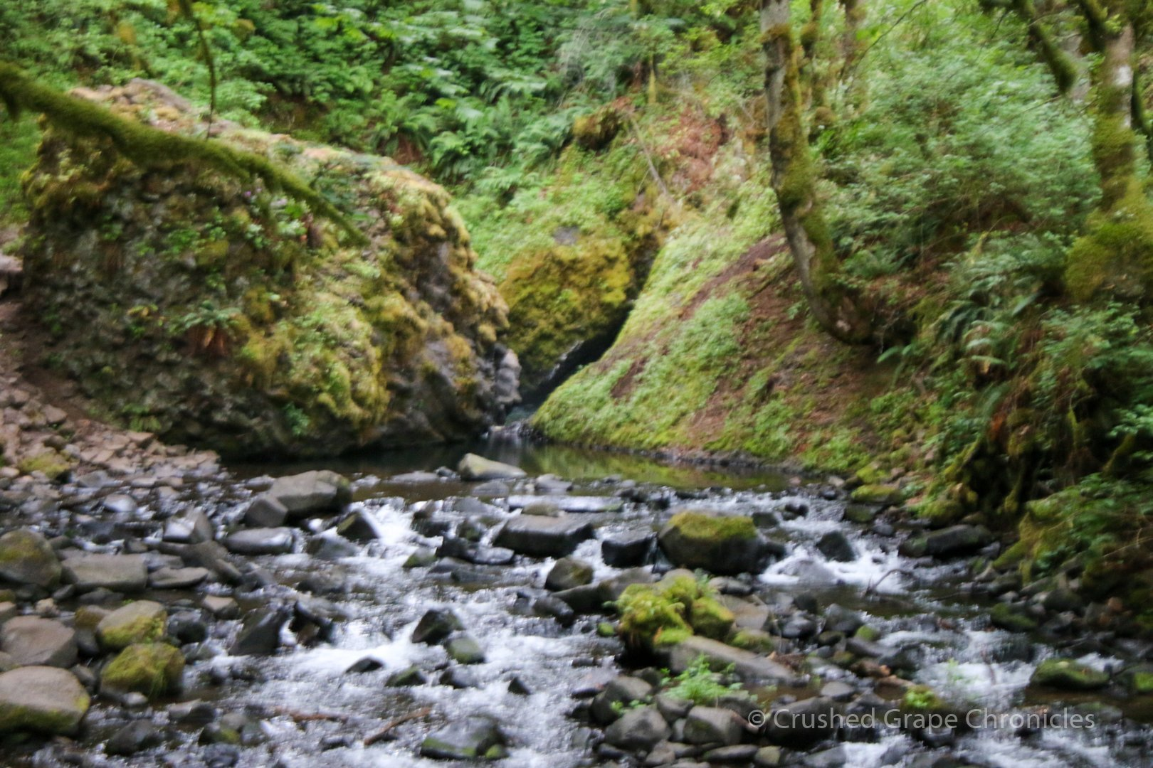 The creek at Bridal Veil Falls Columbia Gorge Oregon