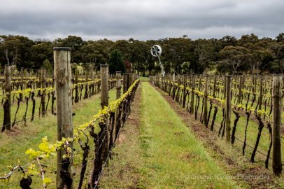 Tertini Wines Yaraandoo Vineyard in Australia's Southern Highlands NSW with the fan for frost protection