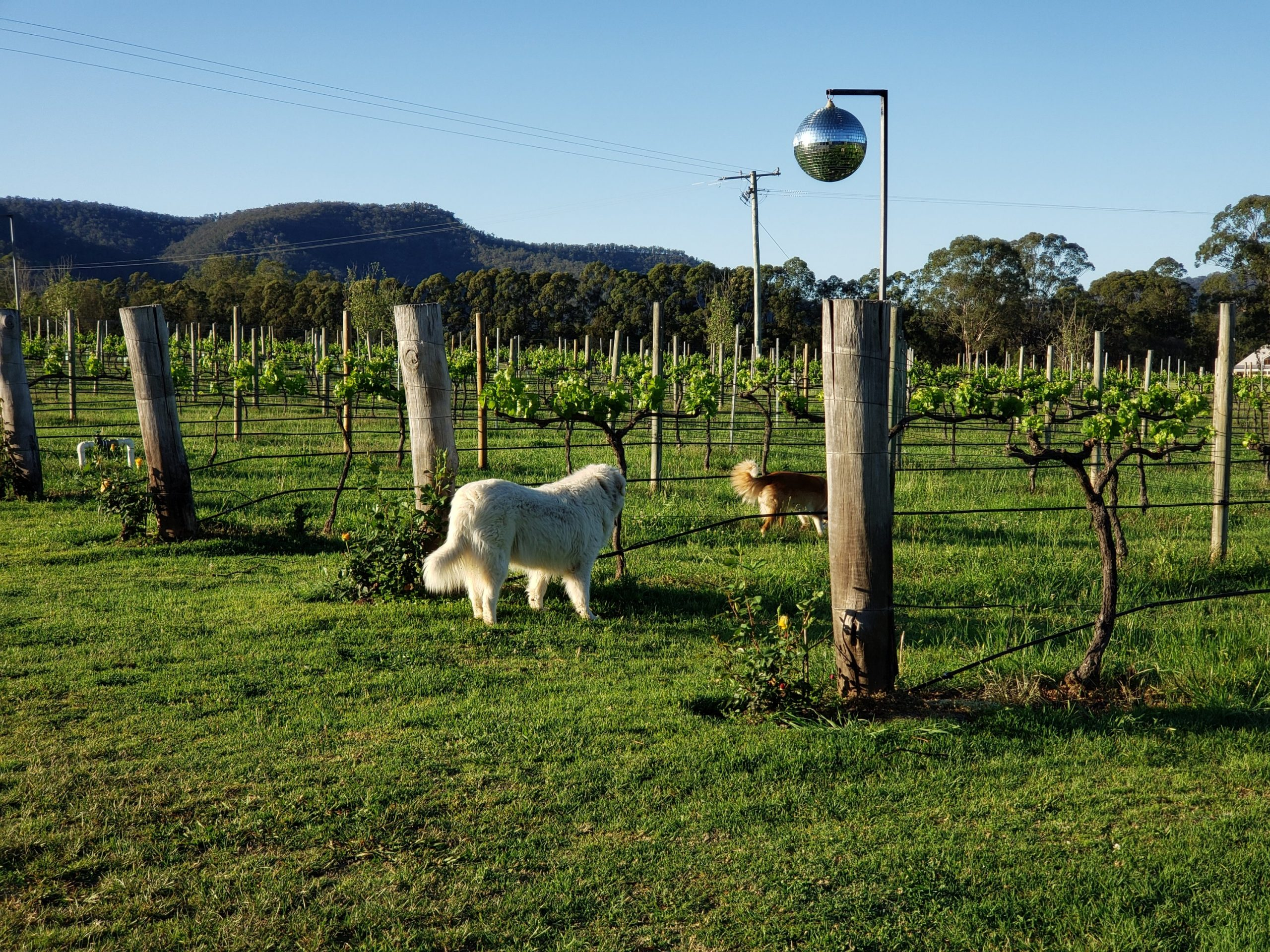 Krinklewood Biodynamic Vineyard Hunter Valley NSW Australia