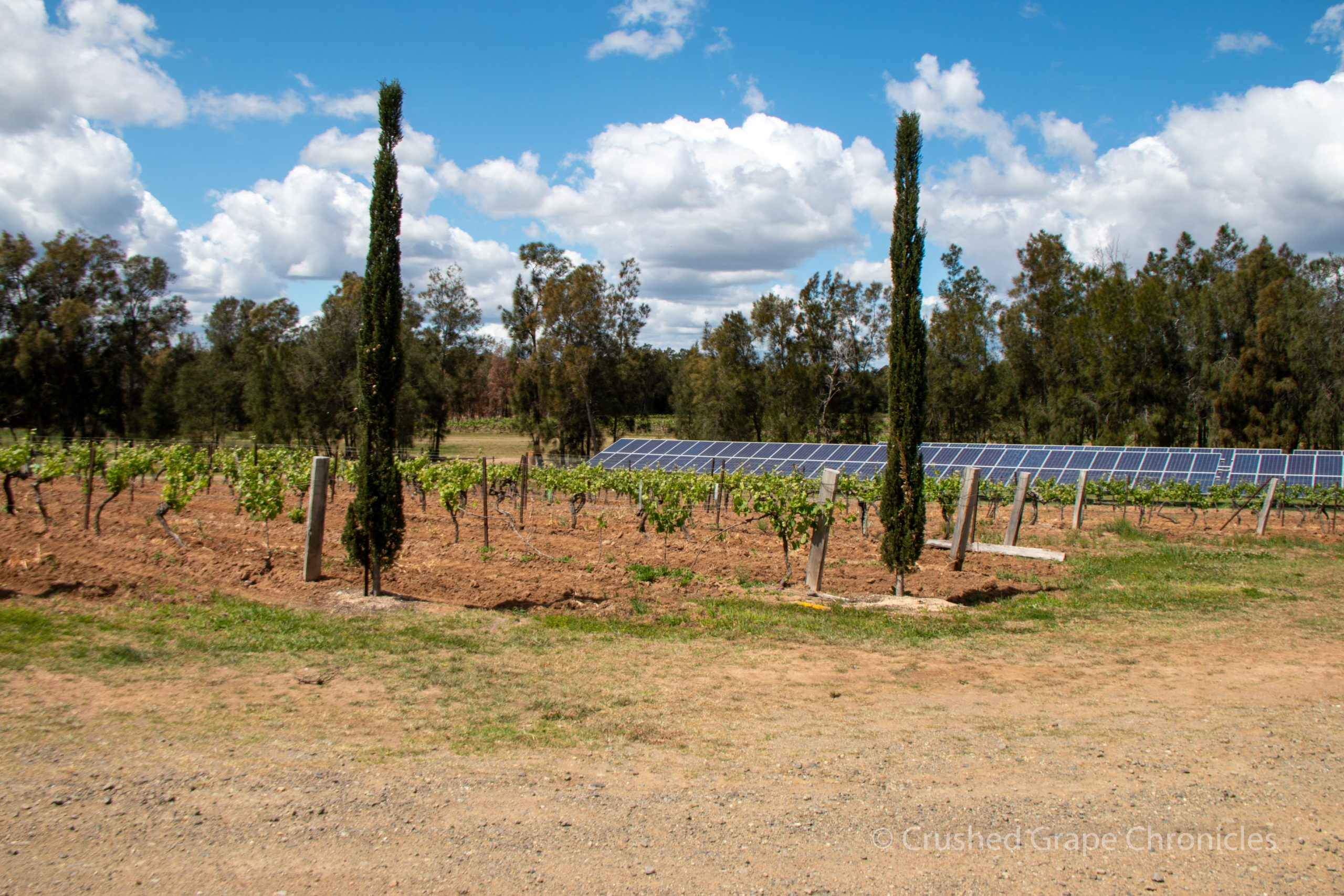 Keith Tulloch Wines in Hunter Valley Australia, a carbon neutral winery, solar panels