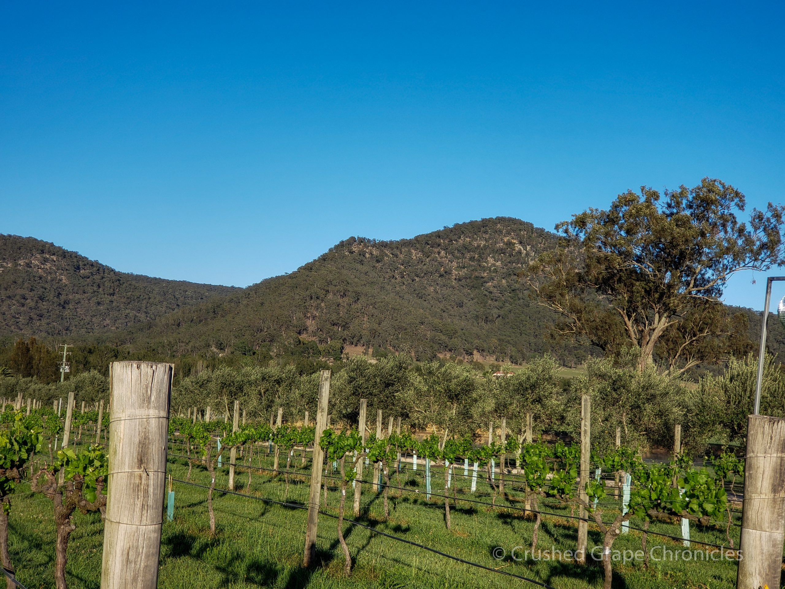 Krinklewood in Hunter Valley Australia 2018 Biodynamic Vineyard