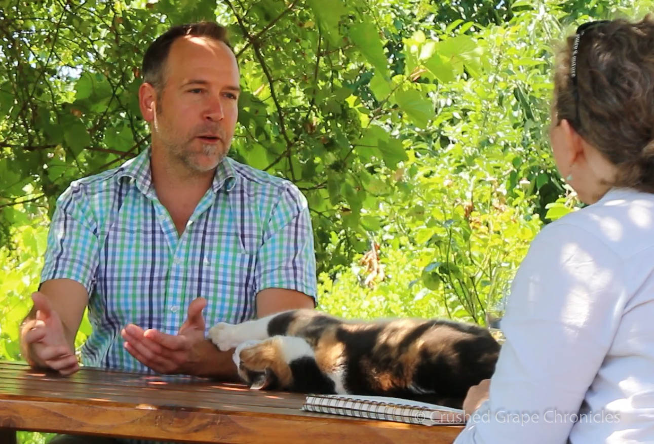 Mo, the Girardet Vineyard Cat, reminding Marc Girardet to continue scratching her ears.