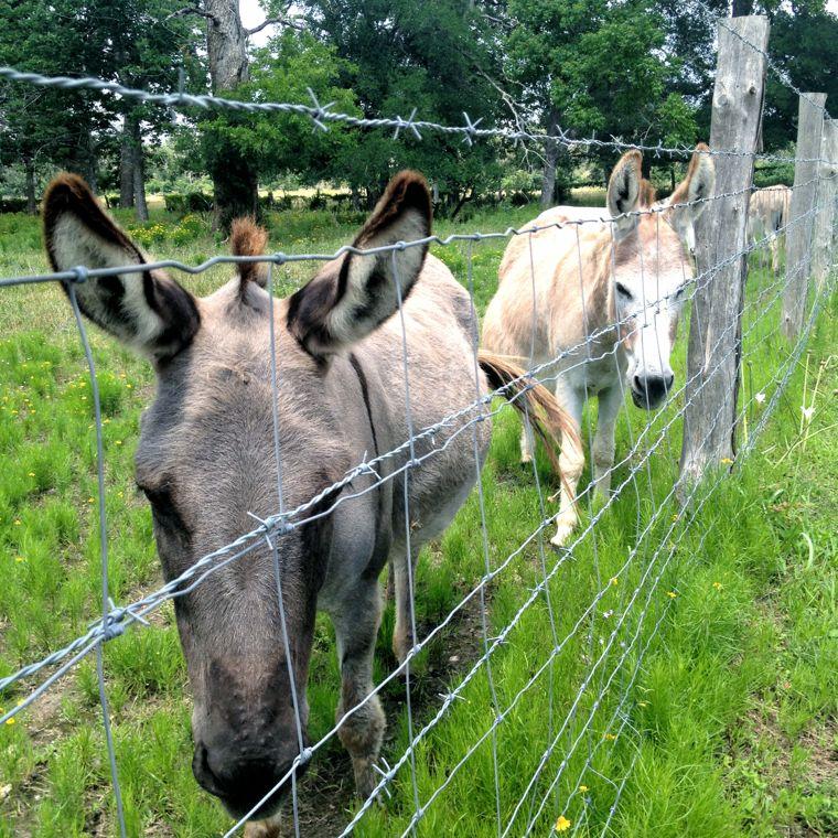 Donkey Dos