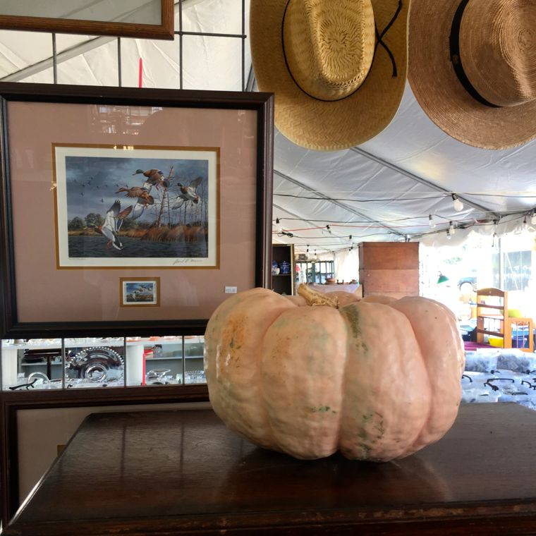 La Bahia Set Up Day: And isn't this lil pumpkin right on color trend?