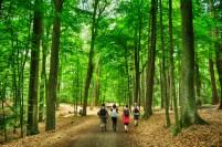 Passeio na floresta em Cesky Raj