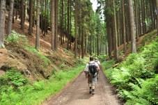 Nos Bosques da Boémia