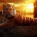 Wild Animals Photo Album