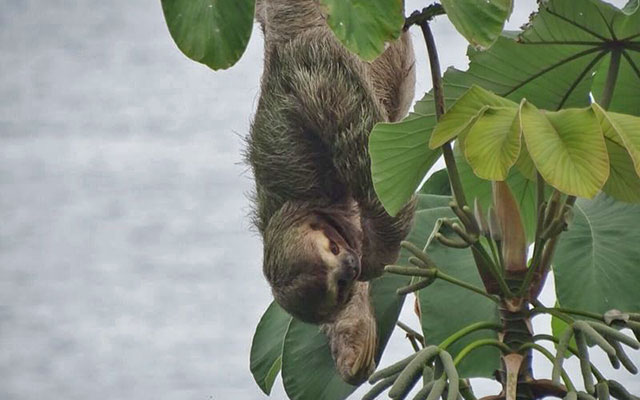 Manuel Antonio Vacation Rental: Villa Play Mono - Sloth