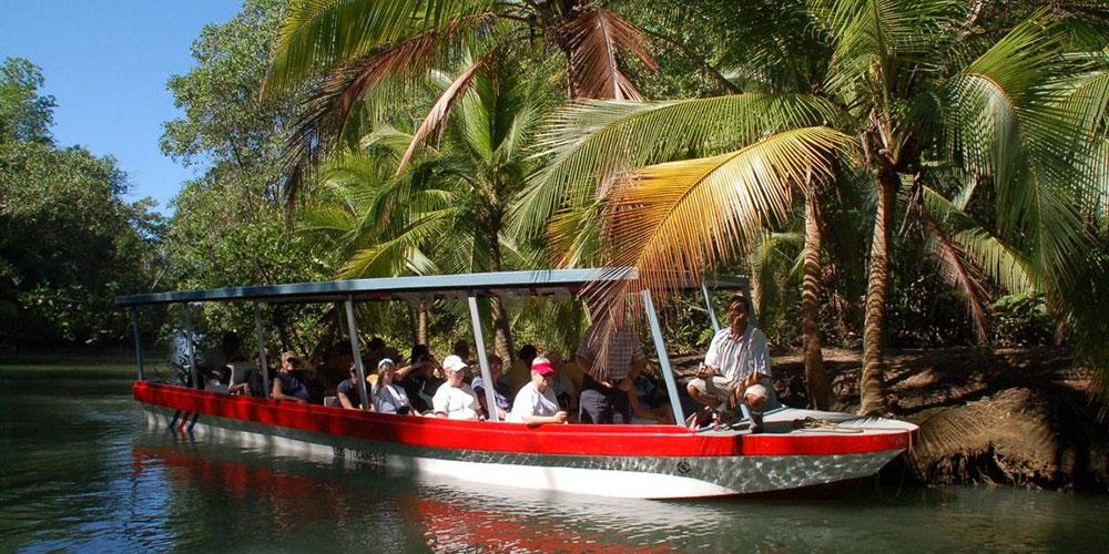 mangrove tour boat