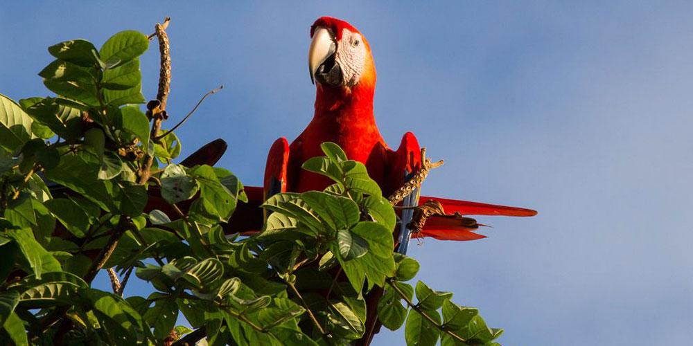 Villa Marbella Scarlet Macaw