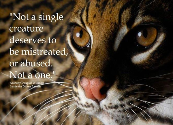 Quote (Ocelot) Not a single creature deserves to be abused..