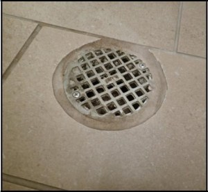 Fly larvae in drains can be treated with Cryonite.
