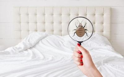 How to Check For Bed Bugs in 6 Ways