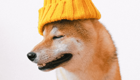 Elon Musk Wants Dogecoin (DOGE) On Coinbase, Price Soars »Crypto Insiders -  World Today News