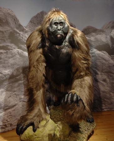 https://i2.wp.com/www.cryptomundo.com/wp-content/uploads/29-gigantopithecus-model_lg.jpg
