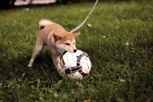 Dogecoin (DOGE) Deflates By 22%, But Hype Still Remains