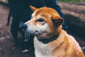 Dogecoin (DOGE) Third Only To Bitcoin, Ethereum For Active Addresses