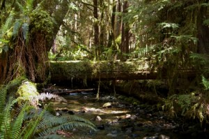 forêt pluviale de Colombie Britannique