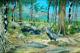 mauritius-7-dodo-dry-forest