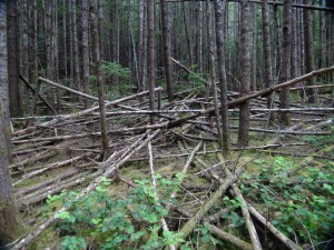 structure (vue d'ensemble)